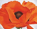 Georgia O'Keeffe Red Poppy painting