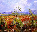 Vincent van Gogh A Field With Poppies painting