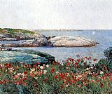Poppies Isles of Shoals